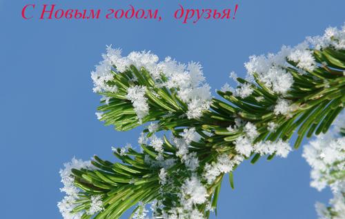 Павел Плюхин. С Новым годом, друзья!