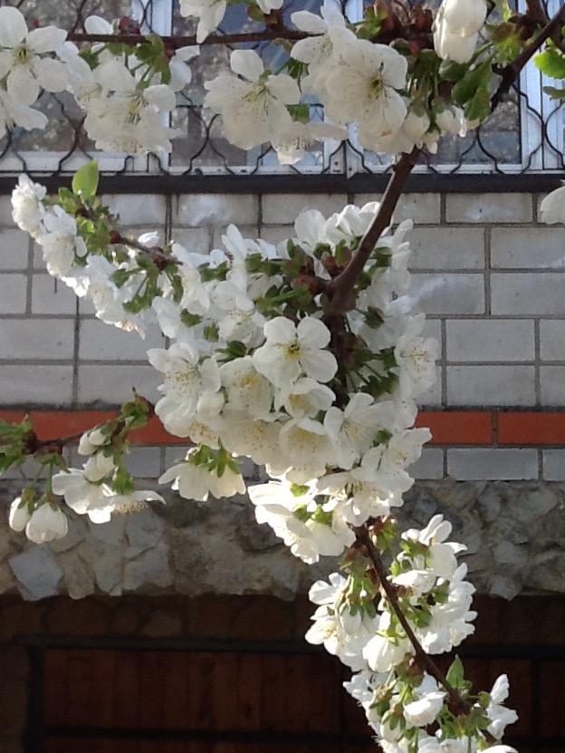 А на юге уже весна. Фото П. Плюхина